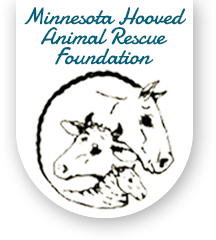 Minnesota Hooved Animal Rescue Foundation